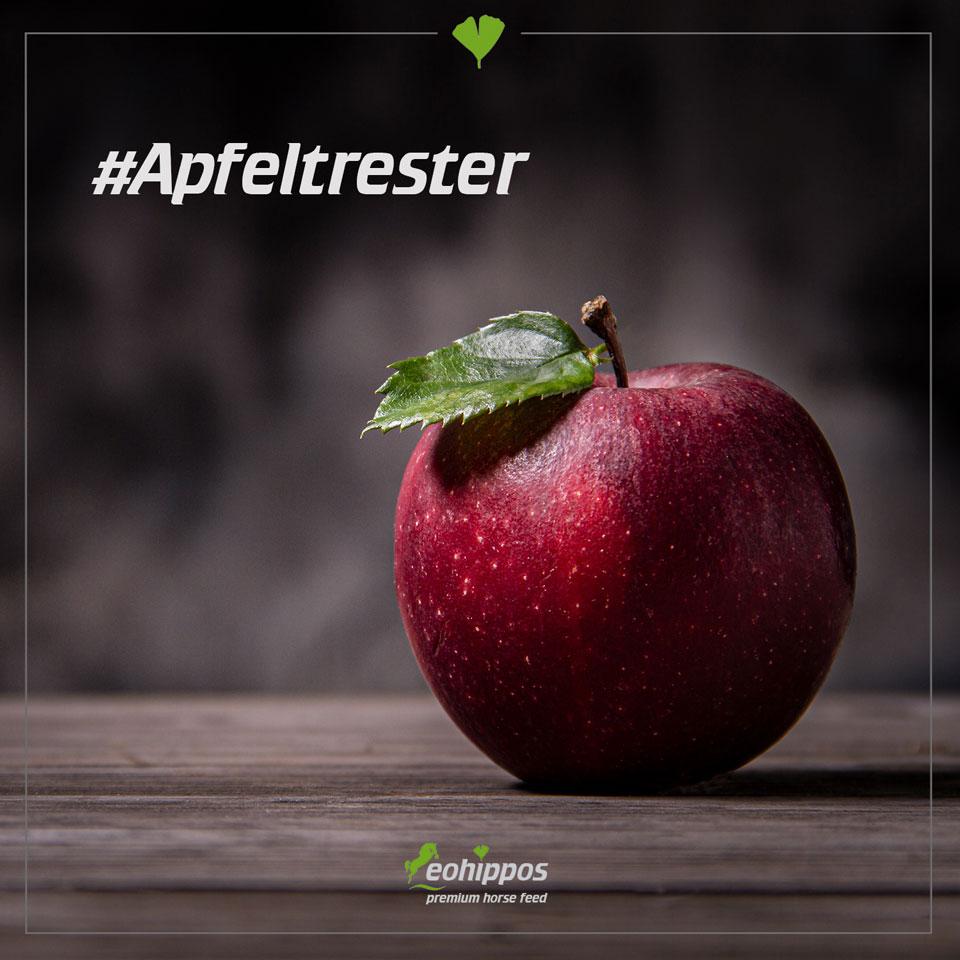 Apfeltrester im Pferdefutter