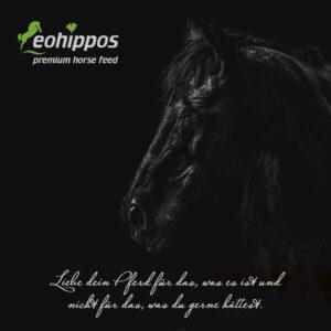 Postkarte für Pferdefreunde mit Zitat - Quote I Eohippos Pferdefutter