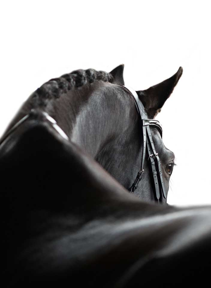 Muskelaufbau  Pferdefutter hochwertiges Futter