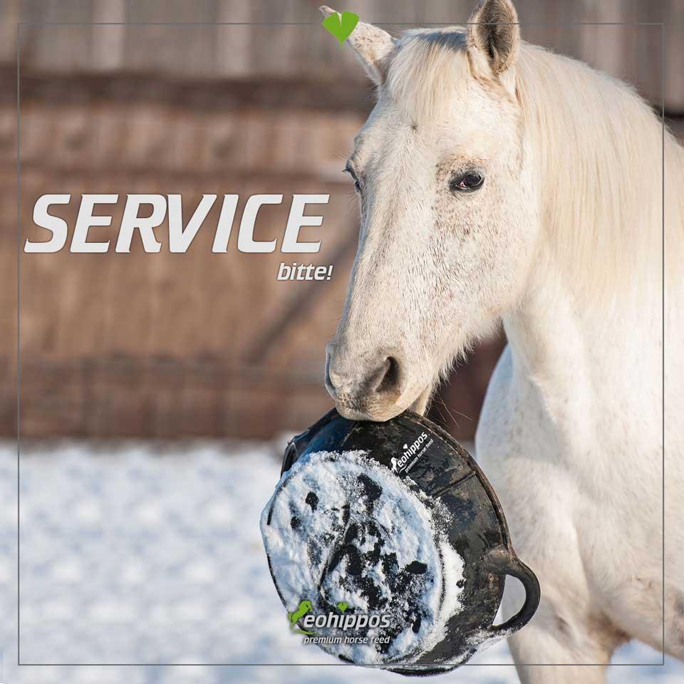 Fütterung von Pferden im Winter - Eohippos Pferdefutter