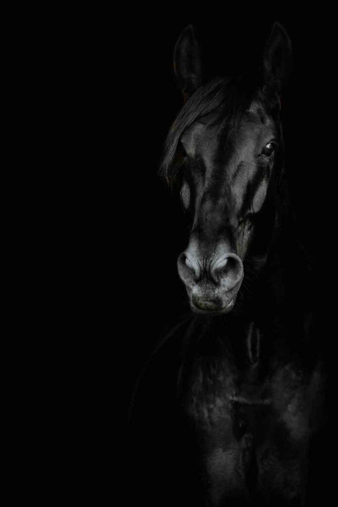 Eohippos Pferdefutter kaufen - getreidefrei melassefrei
