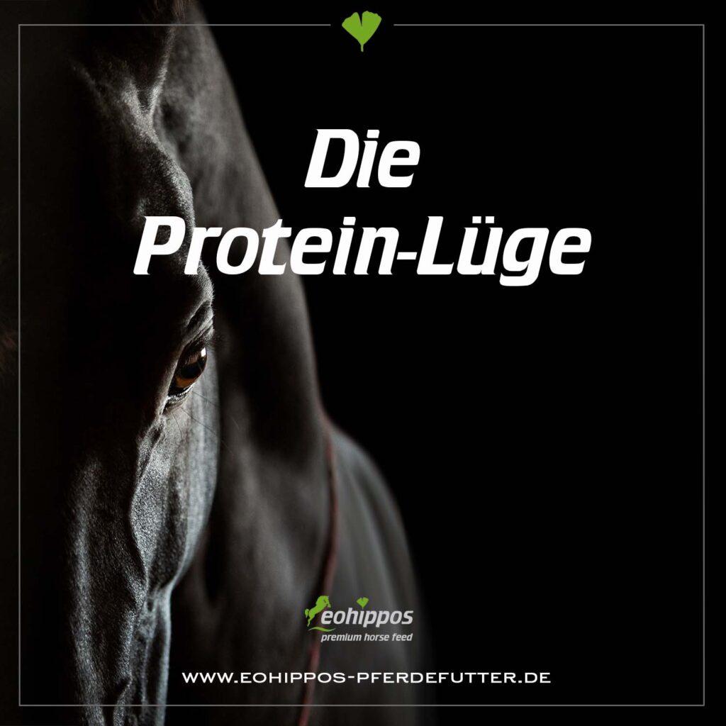 Proteine für Pferde, Proteine im Pferdefutter, dei Proteinlüge